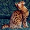 Castello di Flavia: Gatto d amare gatto da salvare