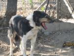 Cane Fifi - ( (7 mesi))
