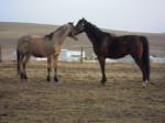 Cavallo Mein Pferd Lennox und Ronny - Maschio ()