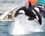 Orca Kiwi - ( (7 anni))
