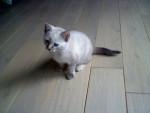 lily - (1 anno)